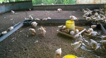 Joalma Poultry Farm
